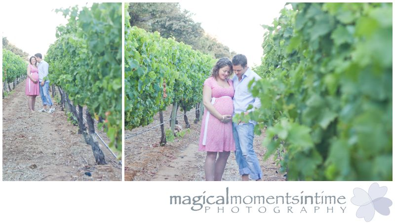 maternity photos in vineyards at groot constantia cape town