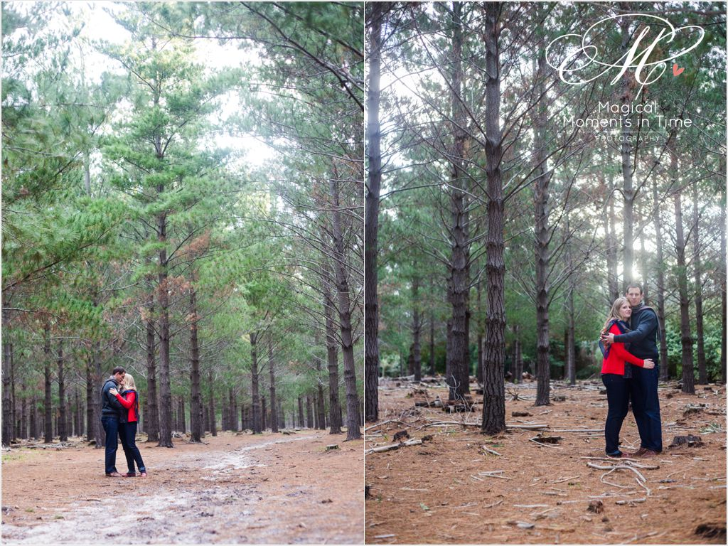 wide angel pine forest engagement photographs