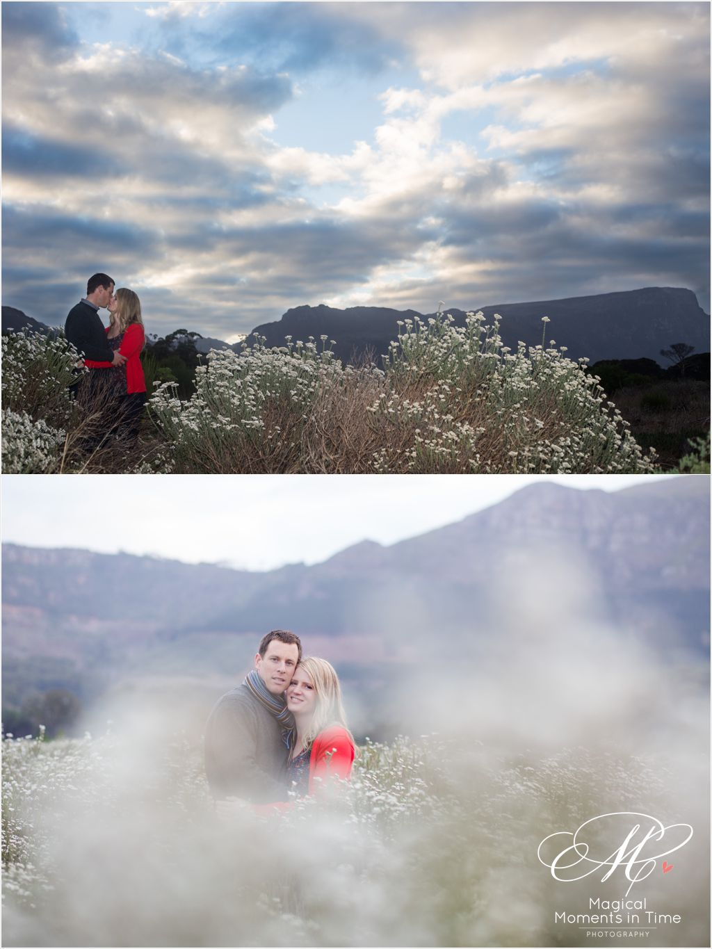 sunset engagement portraits in fynbos in cape town
