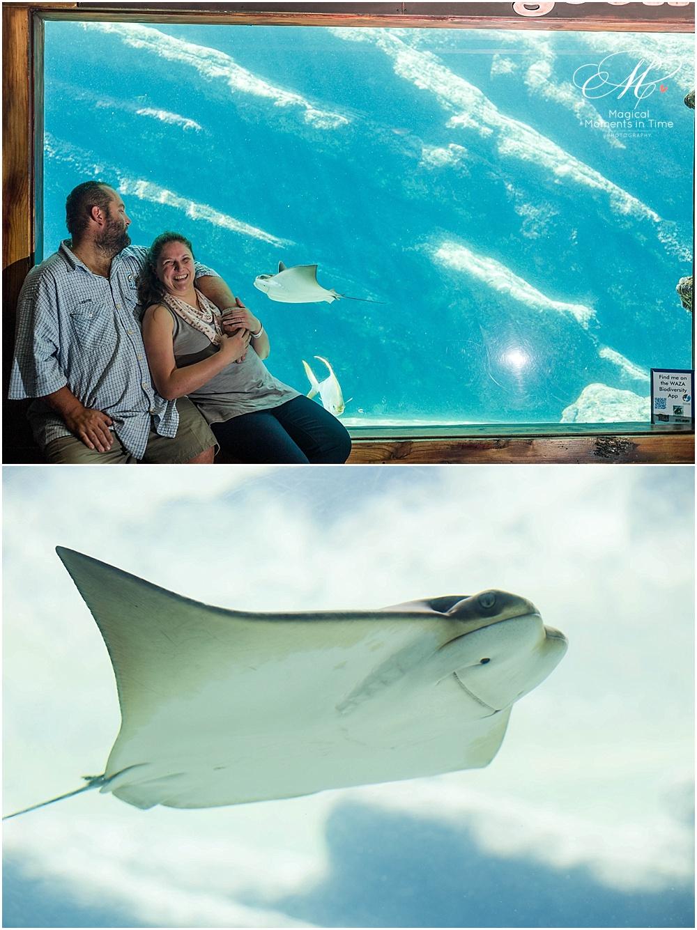 ushaka-aquarium-durban-engagement-photography-stingray
