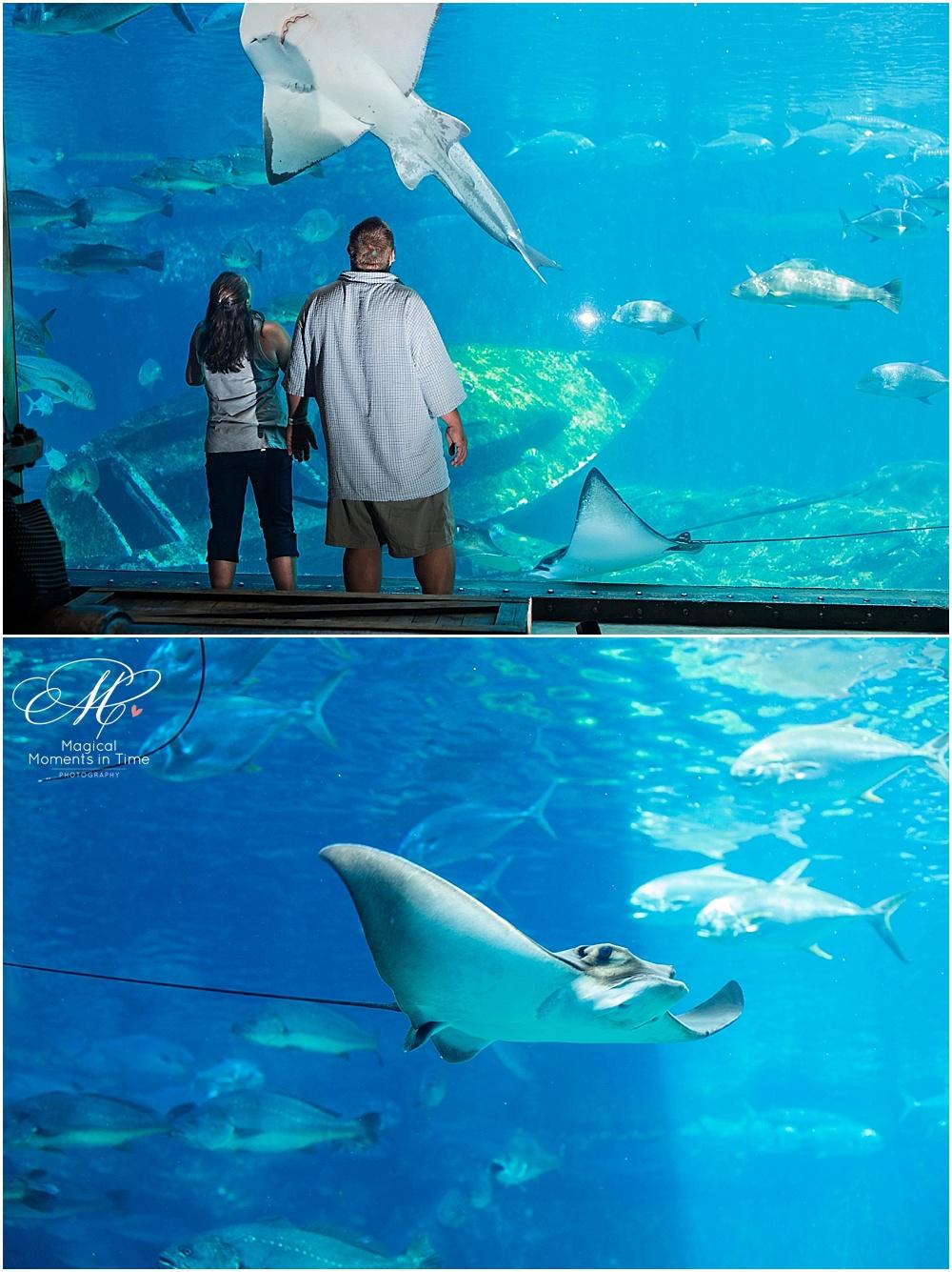 durban-beachfront-ushaka-aquarium-engagement-photography