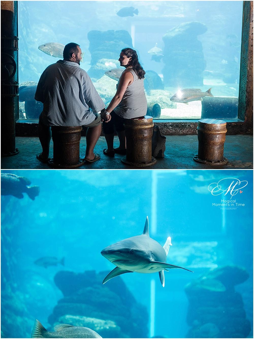 ushaka-aquarium-durban-engagement-photography-sharks